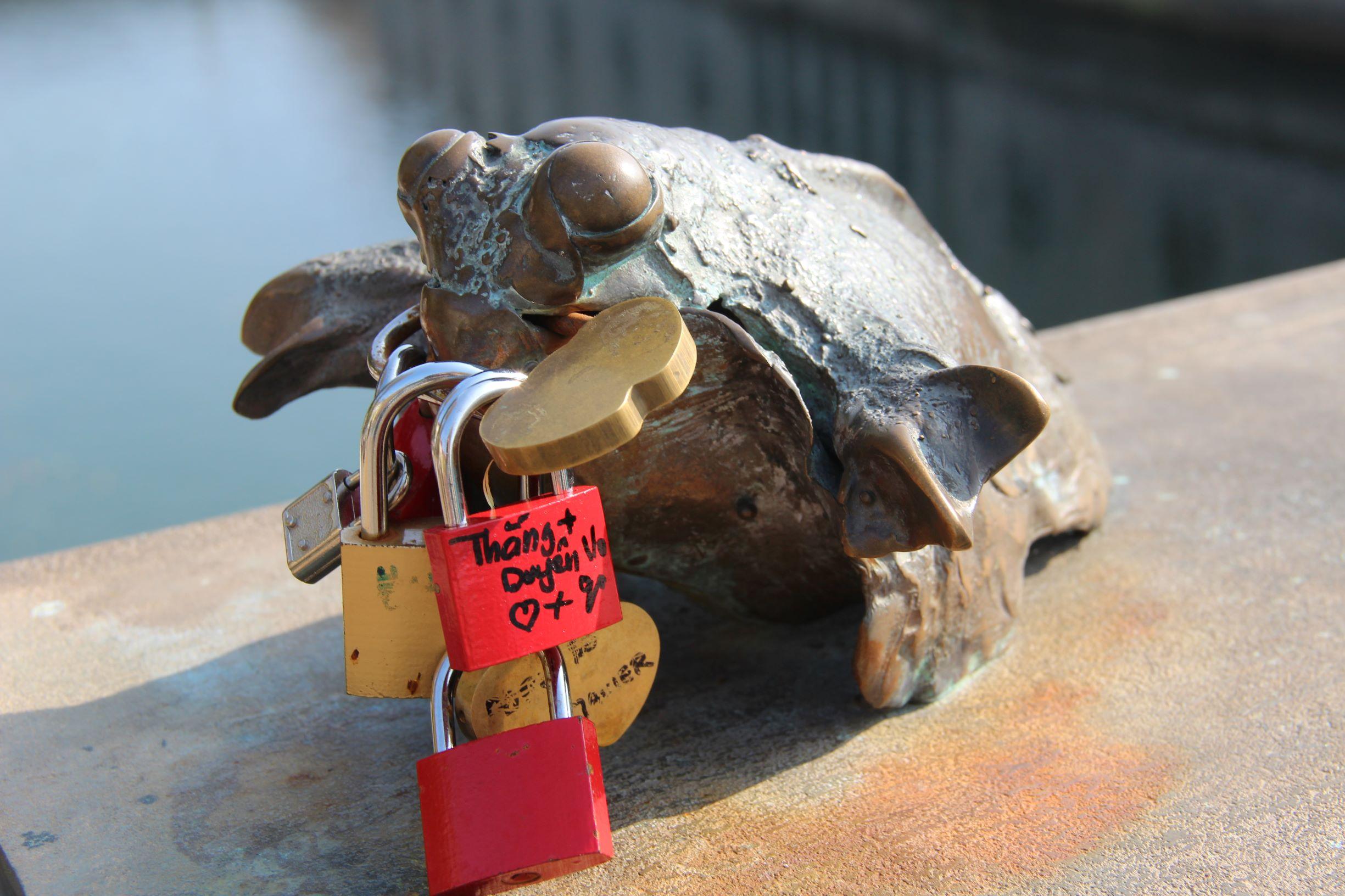 連青蛙都要承受這些愛的枷鎖