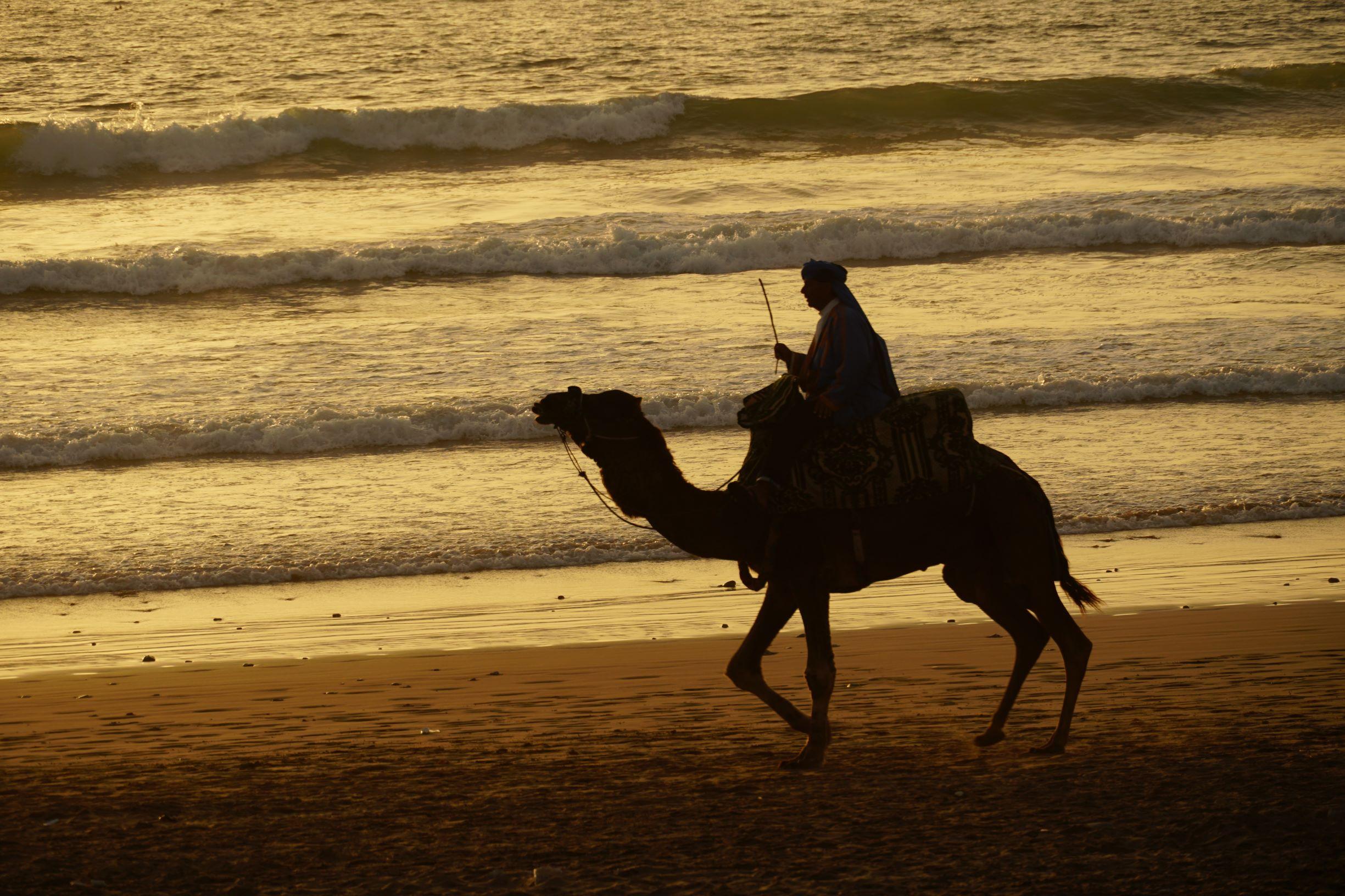 騎著駱駝的藍衣人