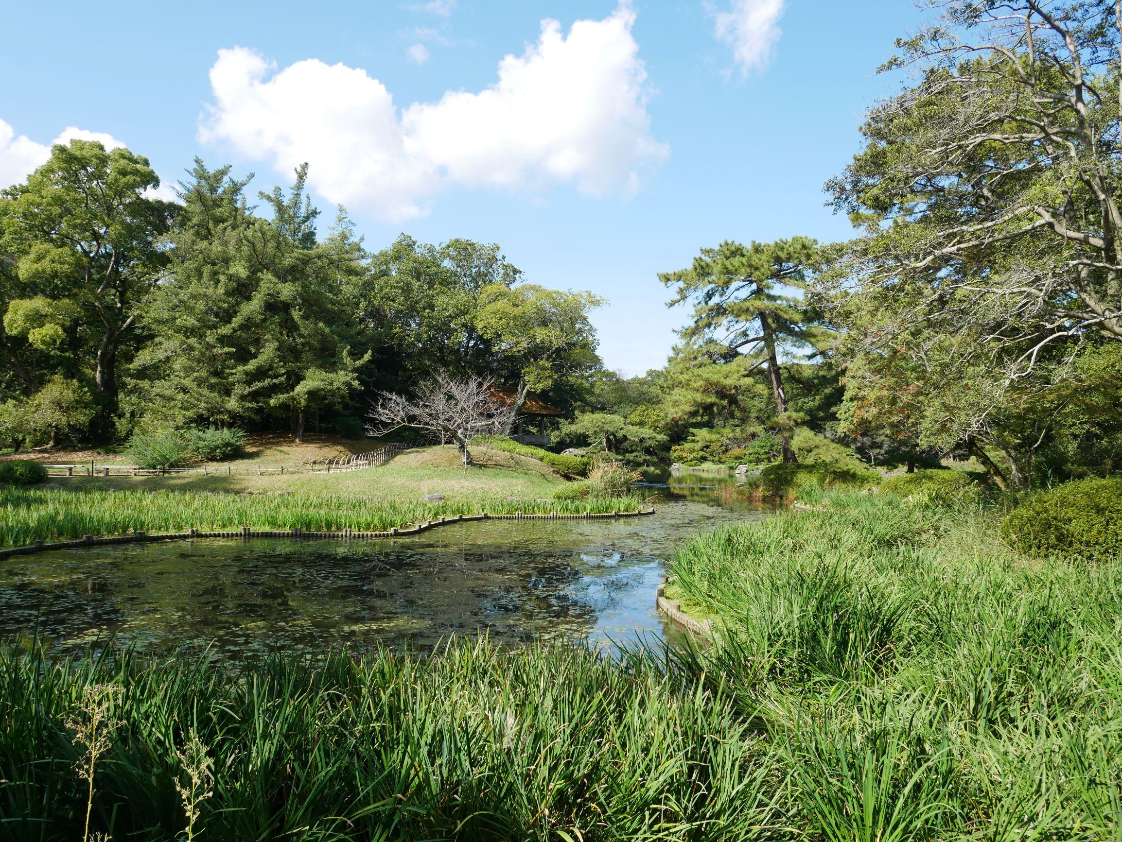 群鴨池旁種了4000多株的花菖蒲