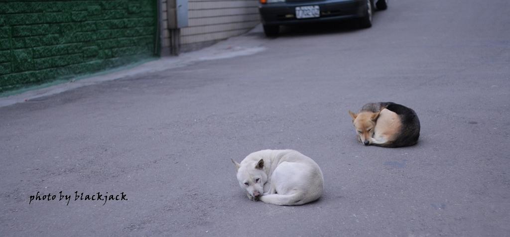 狗 筆者攝