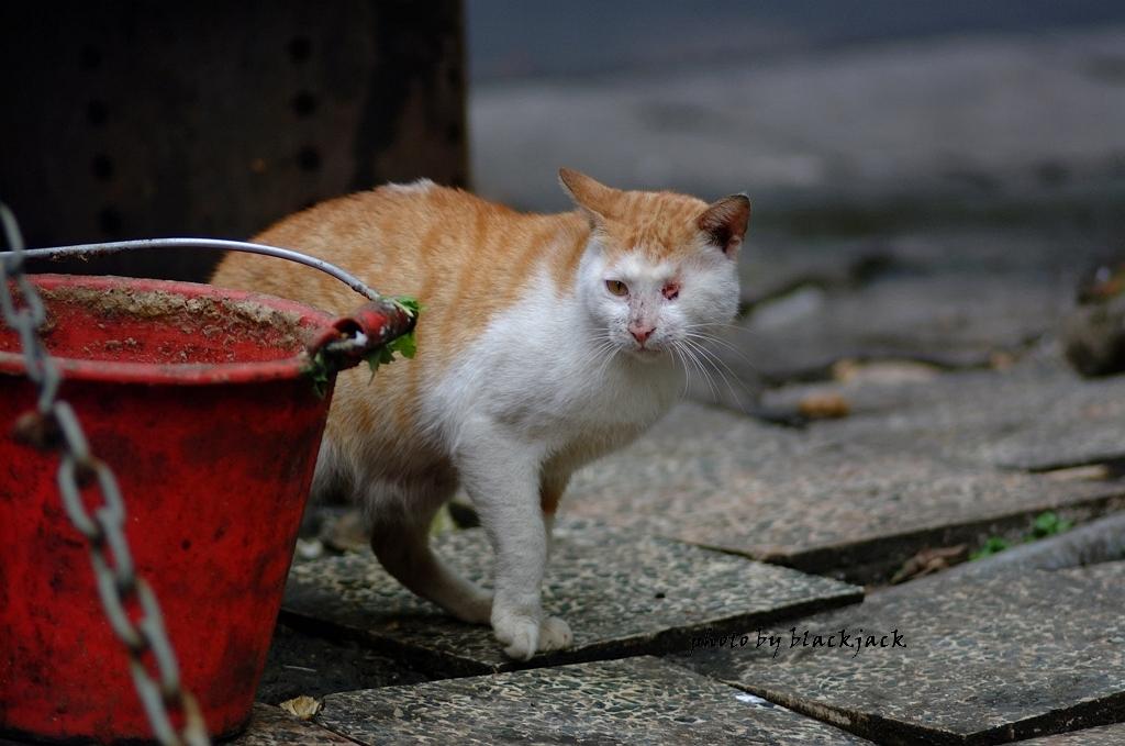 流浪貓 筆者攝